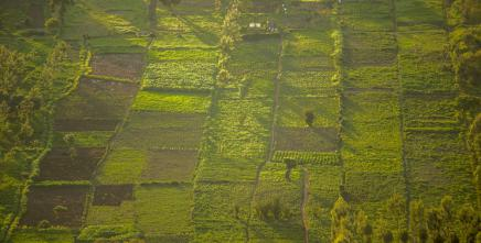 Africa's Land governance issues under spotlight in virtual NELGA meeting
